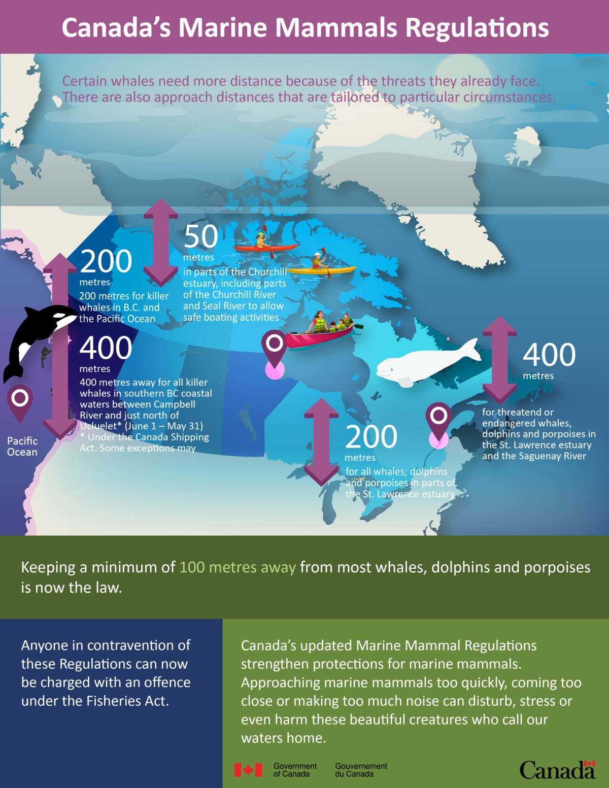 Infographic: Canada's marine mammal regulations