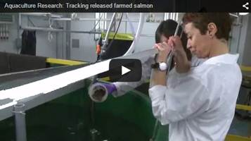 Aquaculture Research: Tracking released farmed salmon Video