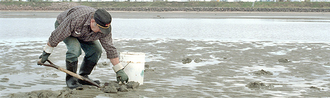 Learn everything you need to know about shellfish harvesting
