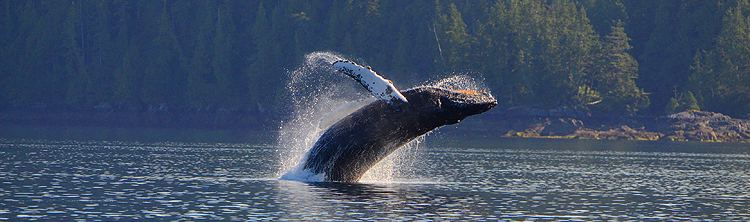 Tips for whale watching
