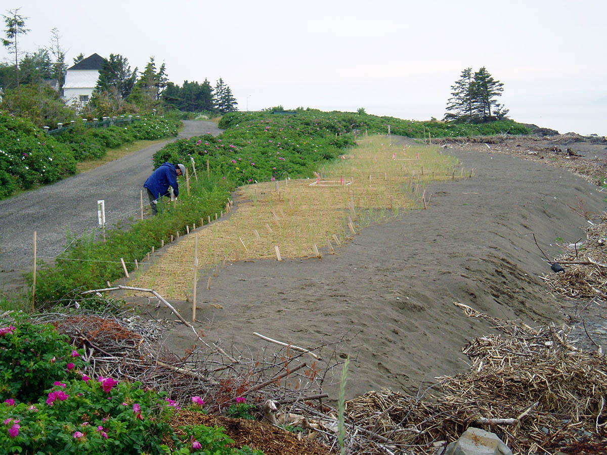 Example of beach redevelopment and revegetation. Photo credit: Sud-de-l'Estuaire ZIP Committee