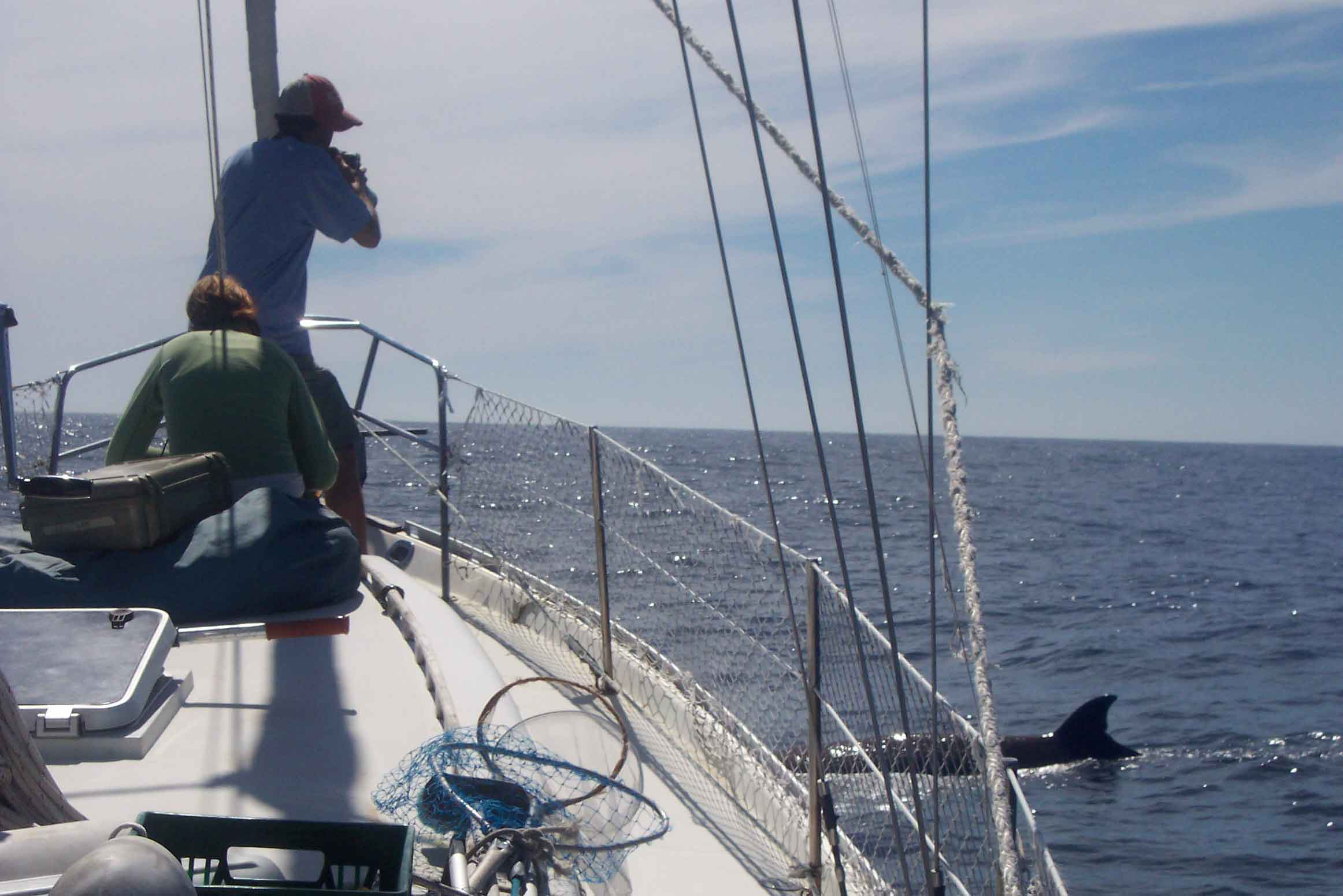 Researcher photographing bottlenose whales from a sailing vessel. Photo Credit: Hilary Moors-Murphy