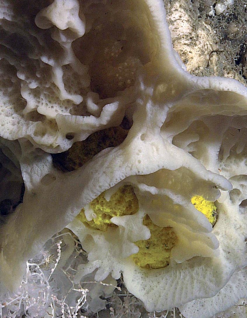 Coral u0026 Sponge Conservation Strategy for Eastern