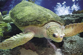 [PHOTO: Sea Turtle]