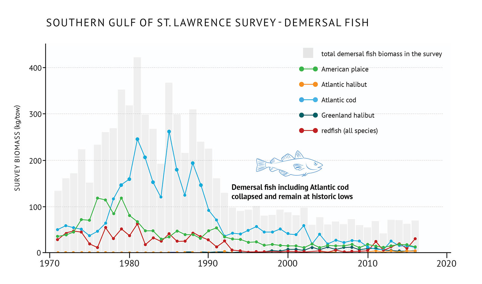 "Figure 20: Survey biomass for total demersal fish and individual species in the southern Gulf of St. Lawrence. A bar and line graph illustrates the survey biomass for total demersal fish as well as individual species in the southern Gulf of St. Lawrence. Text above the graph says ""Southern Gulf of St. Lawrence Survey – Demersal Fish"". The vertical axis on the left shows the survey biomass in units of kilograms per tow from 0 to 400 in increments of 100. The bottom horizontal axis shows the years between 1970 and 2020 in 10 year increments. The biomass for total demersal fish in the survey is represented by grey vertical bars. There is an increase in biomass between 1970 and the early 1980s peaking just over 400 kilograms per tow. It decreases in the early 1990s and it remains low until the last year of data in 2016 when it is less than 100 kilograms per tow. Five demersal fish species are represented by different coloured lines on the same graph. A legend appears on the right. A green data line shows the survey biomass of American plaice. An orange data line represents the survey biomass of Atlantic halibut. A light blue data line represents the survey biomass of Atlantic cod. A dark green data line represents the survey biomass of Greenland halibut. A dark red data line represents the survey biomass of redfish (all species). In the early 1970s, the survey biomass for each species is below 100 kilograms per tow. American plaice, Atlantic cod and redfish have the highest biomasses fluctuating around 50 kilograms per tow, while Greenland halibut and Atlantic halibut have the lowest biomasses. American plaice increases in the 1970s to 1980s to just over 100 kilograms per tow and then decreases again in the late 1970s to 1980s and then remains low. Atlantic cod also increases in the late 1970s to the 1980s fluctuating around 200 kilograms per tow which is the higher than any other species on the graph. There is a large decline in the early 1990s and then it then remains low. Redfish survey biomass fluctuates around approximately 50 kilograms per tow throughout the 1970s to early 1990s when it decreases. There is a modest increase in recent years. Atlantic halibut has a low biomass compared with the other species across the graph with a modest increase in the 2010s. Greenland halibut also has low survey biomass across the graph compared to the other species with a modest increases during the 2000s and early 2010s. A small, light blue outline drawing of an Atlantic cod is placed just above the vertical bars and centred over the year 2000. Below the drawing there is text which states ""Demersal fish including Atlantic cod collapsed and remain at historic lows""."