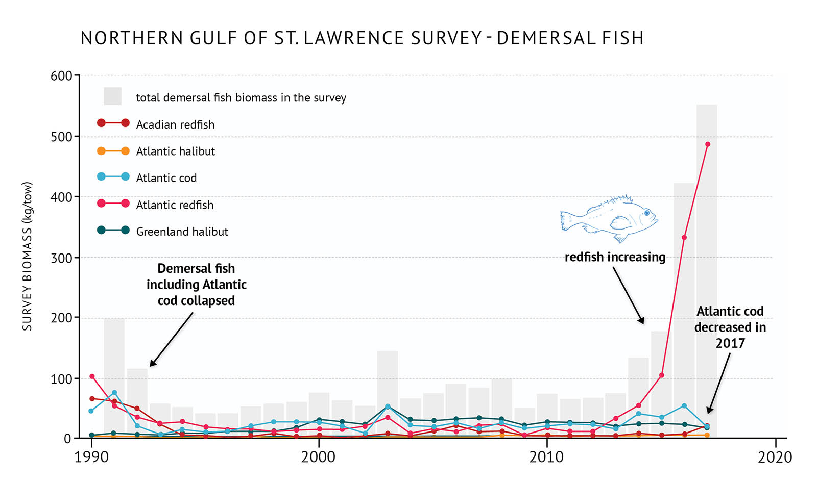 "Figure 21: Survey biomass for total demersal fish and individual species in the northern Gulf of St. Lawrence. A bar and line graph illustrates the survey biomass for total demersal fish as well as individual species in the northern Gulf of St. Lawrence. Text above the graph says ""Northern Gulf of St. Lawrence Survey – Demersal Fish"". The vertical axis on the left shows the survey biomass in units of kilograms per tow from 0 to 600 in increments of 100. The bottom horizontal axis shows the years between 1990 and 2020 in 10 year increments. The biomass for total demersal fish in the survey is represented by grey vertical bars. The survey biomass is approximately 200 kilograms per tow in 1990 and decreases through the early 1990s remaining below 100 kilograms per tow across most of the graph. It begins to rise in the 2010s peaking above 500 kilograms per tow in 2017 which is the last year of data on the graph. Five demersal fish species are represented by different coloured lines on the same graph. A legend appears on the left. A dark red data line shows the survey biomass of Acadian redfish. An orange data line shows the survey biomass of Atlantic halibut. A light blue data line shows the survey biomass of Atlantic cod. A light red data line shows the survey biomass of Atlantic redfish. A dark green data line shows the survey biomass of Greenland halibut. The survey biomasses for individual species all remain at or below 100 kilograms per tow across the graph until the mid-2010s. Acadian redfish, Atlantic redfish, and Atlantic cod generally have the highest survey biomasses, but they each decrease during the early 1990s and then remain low until the 2000s. Atlantic redfish begins to increase rapidly in the 2010s, peaking at approximately 500 kilograms per tow in 2017. Atlantic cod increases slowly in the 2000s but decreases again in 2017. Greenland halibut and Atlantic halibut have lower survey biomasses compared to the other three species. Greenland halibut increases in the 1990s, but declines in the recent years while Atlantic halibut increases after 2010. Above the vertical bars to the left-hand side of the graph, a line of text says ""Demersal fish including Atlantic cod collapsed"". An arrow under the text points down towards 1991. A small, light blue outline drawing of a redfish is placed just above the vertical bars to the right-hand side. Below the drawing there is text which states ""redfish increasing"" and an arrow points downward to the light red line. Another line of text on the far right-hand side of the graph says ""Atlantic cod decreased in 2017"". An arrow points from the text to the light blue line in 2017."