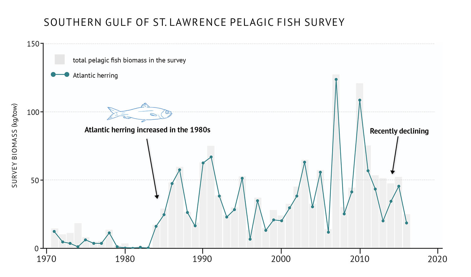 "Figure 22: Survey biomass for total pelagic fish and Atlantic herring in the southern Gulf of St. Lawrence. A bar and line graph illustrates the survey biomass for total pelagic fish as well as Atlantic herring in the southern Gulf of St. Lawrence. Text above the graph says ""Southern Gulf of St. Lawrence Pelagic Fish Survey"". The vertical axis on the left shows the survey biomass in units of kilograms per tow from 0 to 150 in increments of 50. The bottom horizontal axis shows the years between 1970 and 2020 in 10 year increments. The survey biomass for total pelagic fish in the survey is represented by grey vertical bars. The total pelagic fish survey biomass is low throughout the 1970s, but increases rapidly in the 1980s. It then generally fluctuates between approximately 25 and 50 kilograms per tow with two peaks above 100 kilograms per tow in the late 2000s and early 2010s. It decreases in 2016 which is the last year of data on the graph. The survey biomass of Atlantic herring is represented by a green line on the same graph. A legend appears on the left. The Atlantic herring survey biomass generally reflects that of the total pelagic fish survey biomass. It is low during the 1970s and then increases in the 1980s and remains mostly between 25 and 50 kilograms per tow with two peaks above 100 kilograms per town in the late 2000s to early 2010s. Then in the 2010s it decreases. A small, light blue outline drawing of an Atlantic herring is placed above the vertical bars to the left-hand side of the graph. Below the drawing there is text which states ""Atlantic herring increased in the 1980s"". An arrow points down to the mid-1980s period. Another line of text on the right-hand side of the graph says ""Recently declining"". An arrow points from the text to the mid-2010s period."