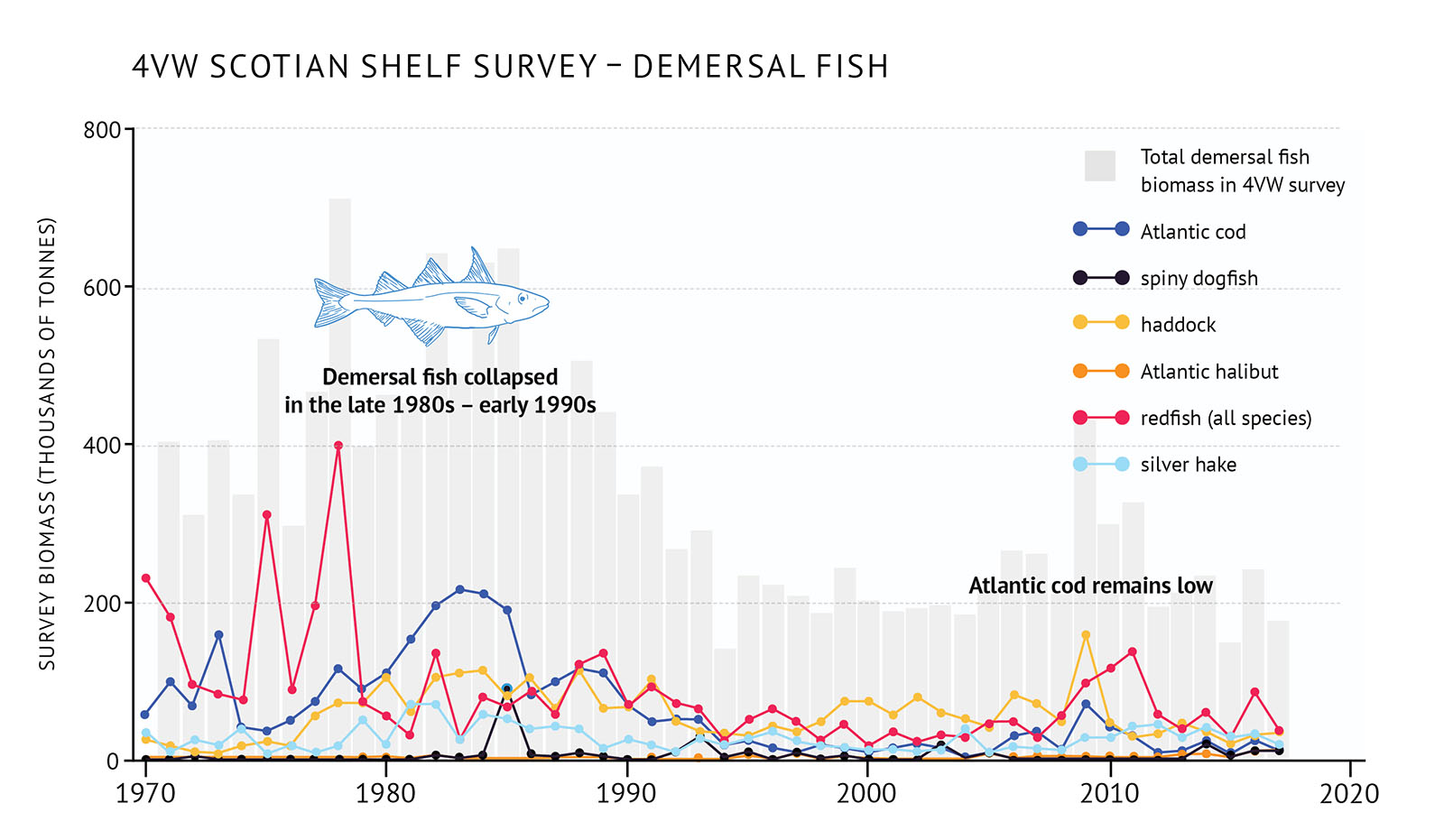 "Figure 27: 4VW (eastern Scotian Shelf) survey biomass for total demersal fish and individual species. A bar and line graph illustrates the survey biomass for total demersal fish as well as individual species for the 4VW NAFO zone of the eastern Scotian Shelf. Text above the graph says ""4VW Scotian Shelf Survey – Demersal Fish"". The vertical axis on the left shows the survey biomass in units of thousands of tonnes from 0 to 800 in increments of 200. The bottom horizontal axis shows the years between 1970 and 2020 in 10 year increments. The biomass for total demersal fish in the 4VW survey is represented by grey vertical bars. The total survey biomass increases from approximately 400 thousand tonnes in 1970 to approximately 700 thousand tonnes in 1979. There is a large decline in the late 1980s and early 1990s to approximately 200 thousand tonnes. After that it is low with some fluctuation. The last year of data is 2017. Six demersal fish species are represented by different coloured lines on the same graph. A legend appears on the right. A dark blue data line illustrates the survey biomass trend for Atlantic cod. A black data line illustrates the survey biomass trend for spiny dogfish. A yellow data line illustrates the survey biomass trend for haddock. An orange data line illustrates the survey biomass trend for Atlantic halibut. A red data line illustrates the survey biomass trend for redfish (all species). A light blue data line illustrates the survey biomass trend for silver hake. Atlantic cod biomass peaks at approximately 200 thousand tonnes in the early 1980s. It then decreases in the late 1980s and early 1990s and remains low to 2017. Redfish biomass is higher than other species in the 1970s with fluctuations. It peaks at near 400 thousand tonnes in the late 1970s, but then decreases in the 1980s to near 100 thousand tonnes and lower again in the 1990s. In the late 2000s and early 2010s it rises and then declines again. Haddock biomass increases to near 100 thousand tonnes in the late 1970s and decreases in the early 1990s. It remains at that level with some fluctuations until 2017. Silver hake increases during the 1980s when it is between 50 and 100 thousand tonnes, but then declines in the late 1980s and early 1990s. It increases modestly in the 2010s. Spiny dogfish and Atlantic halibut have very low biomass compared to the other species on the graph. Spiny dogfish shows no trend and Atlantic halibut biomass increases slightly in the 2010s. A small, light blue outline-drawing of a haddock is placed on the graph overlapping the vertical bars on the top to the left hand-side. Below the drawing there is text which states ""Demersal fish collapsed in the late 1980s – early 1990s"". Another line of text lies to the right hand-side of the graph just overlapping the top of the vertical bars which says ""Atlantic cod remains low""."