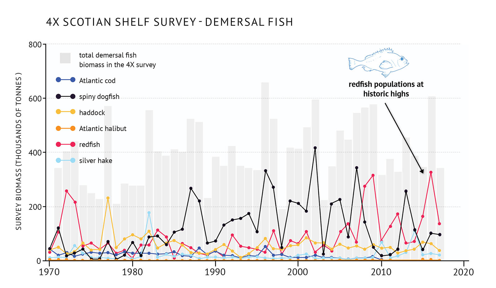 "Figure 28: 4X (western Scotian Shelf and Bay of Fundy) survey biomass for total demersal fish and individual species. A bar and line graph illustrates the survey biomass for total demersal fish as well as individual species for the 4X NAFO zone of the eastern Scotian Shelf. Text above the graph says ""4X Scotian Shelf Survey – Demersal Fish"". The vertical axis on the left shows the survey biomass in units of thousands of tonnes from 0 to 800 in increments of 200. The bottom horizontal axis shows the years between 1970 and 2020 in 10 year increments. The biomass for total demersal fish in the 4VW survey is represented by grey vertical bars. The total survey biomass fluctuates between approximately 200 thousand tonnes and 600 thousand tonnes over the timespan of 1970 to 2017 with no long-term trend. Six demersal fish species are represented by different coloured lines on the same graph. A legend appears on the left. A dark blue data line illustrates the survey biomass trend for Atlantic cod. A black data line illustrates the survey biomass trend for spiny dogfish. A yellow data line illustrates the survey biomass trend for haddock. An orange data line illustrates the survey biomass trend for Atlantic halibut. A red data line illustrates the survey biomass trend for redfish. A light blue data line illustrates the survey biomass trend for silver hake. Atlantic cod biomass between 1970 and 2010 is less than 50 thousand tonnes with small fluctuations. In the mid-2000s the biomass decreases and remains very low. There is a peak in redfish biomass in the early 1970s, and then it fluctuates around 100 thousand tonnes until the mid-2000s when it is generally higher with peaks of approximately 300 thousand tonnes. Spiny dogfish biomass fluctuates, but after the 1980s is generally higher with peaks between 200 and 400 thousand tonnes. Haddock is generally below 100 thousand tonnes with small fluctuations and no trend until it increases in the mid-2010s. Atlantic halibut has a low biomass compared to other species on the graph, but increases in recent years. Silver hake biomass is low compared to the other species with small fluctuations. A small, light blue outline-drawing of a redfish is placed on the graph above the vertical bars to the right-hand side. Below the drawing there is text which states ""redfish populations at historic highs"". An arrow points from the text to the red line in the mid-2010s."