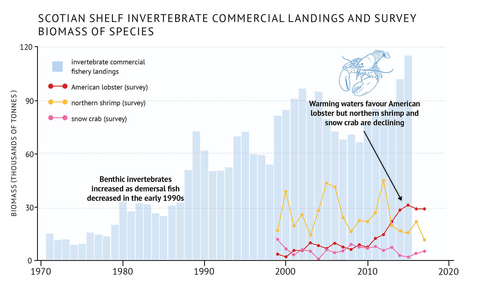 "Figure 30: Scotian Shelf commercial landings for benthic invertebrate species and survey biomass for individual benthic invertebrate species. Commercial landings show a long-term increasing trend. Data collection by research survey began in 1999. A bar graph illustrates commercial landings for benthic invertebrates combined with line graphs illustrating the survey biomass for individual invertebrate species on the Scotian Shelf. Text above the graph says ""Scotian Shelf Invertebrate Commercial Landings and Survey Biomass of Species"". The vertical axis on the left shows the biomass in units of thousands of tonnes from 0 to 120 in increments of 30. The bottom horizontal axis shows the years between 1970 and 2020 in 10 year increments. The commercial landings are represented by light blue vertical bars which increase steadily with some fluctuations from approximately 15 thousand tonnes in the early 1970s to almost 120 thousand tonnes in the last year of data in 2015. The survey biomass of three invertebrates species are represented by different coloured lines on the same graph. The survey data starts in 1999 and ends in 2017. A legend appears on the left. A red data line illustrates the survey biomass trend for American lobster. A yellow data line illustrates the survey biomass trend for northern shrimp. A pink data line illustrates the survey biomass trend for snow crab. Northern shrimp biomass is higher than the other species on the graph. It fluctuates between approximately 15 thousand tonnes to 40 thousand tonnes, declining in recent years. The American lobster biomass fluctuates around 10 thousand tonnes until 2010 and then increases rapidly to approximately 30 thousand tonnes by the mid-2010s. The trend of the snow crab biomass is below 10 thousand tonnes with small fluctuations, and is lower in the last years of data. A line of text is placed to the left-hand side of the graph just above the vertical bars. It says ""Benthic invertebrates increased as demersal fish decreased in the early 1990s"". A small, light blue outline-drawing of an American lobster is placed on the graph above the vertical bars to the right-hand side. Below the drawing there is text which states ""Warming waters favour American lobster but northern shrimp and snow crab are declining"". An arrow points down to the red line in the mid-2010s."