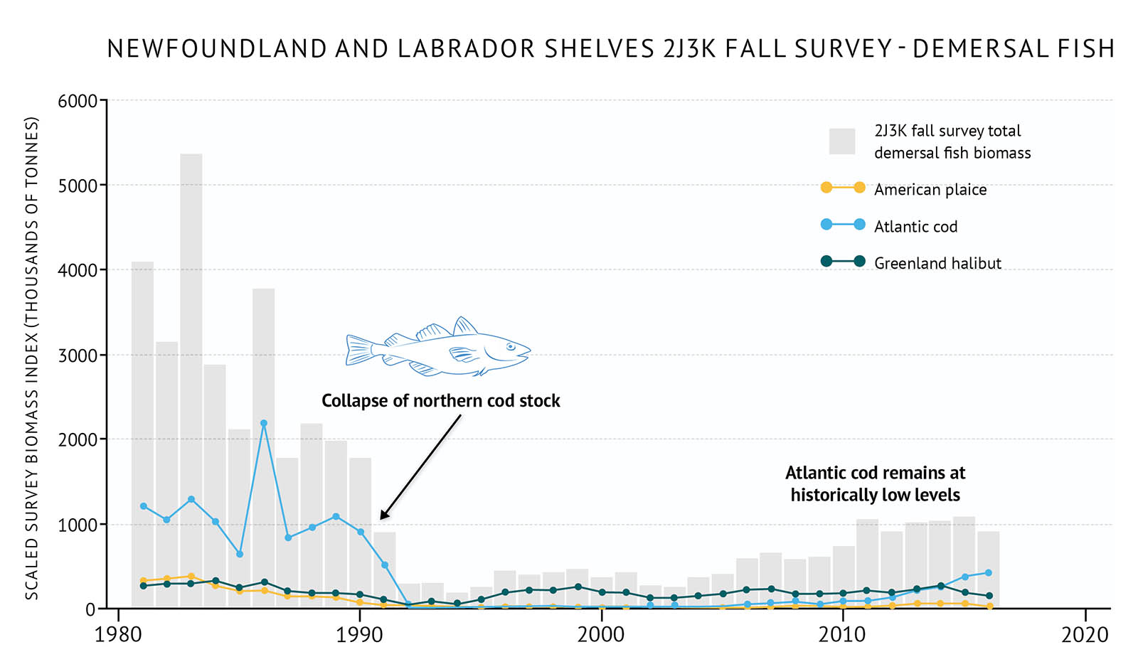"Figure 33: Fall survey biomass of demersal fish species in 2J3K on the Newfoundland and Labrador Shelves along with individual demersal species biomass. A bar and line graph illustrates the fall survey biomass for demersal fish as well as individual species for the 2J3K NAFO zone of the Newfoundland and Labrador Shelves. Text above the graph says ""Newfoundland and Labrador Shelves 2J3K Fall Survey – Demersal Fish"". The vertical axis on the left shows the scaled survey biomass index in units of thousands of tonnes from 0 to 6000 in increments of 1000. The bottom horizontal axis shows the years between 1980 and 2020 in 10 year increments. The biomass for total demersal fish is represented by grey vertical bars. The total survey biomass is between 3000 and 5500 thousand tonnes in the early 1980s and then there is a large decline to approximately 250 thousand tonnes by 1992. It remains low in the 1990s and 2000s, and then there is a modest increase in the mid-2000s to near 1000 thousand tonnes. The fall survey biomass for three demersal fish species is represented by different coloured lines on the same graph. A legend appears on the right. A yellow data line illustrates the survey biomass trend for American plaice. A light blue data line illustrates the survey biomass trend for American cod. A dark green data line illustrates the survey biomass trend for Greenland halibut. Atlantic cod biomass is over 1000 thousand tonnes in the 1980s, but then There is a large decline in the late 1980s and early 1990s with the biomass approaching the bottom of the graph. There is a modest increase starting in the mid-2000s bringing the biomass towards 300-400 thousand tonnes. American plaice and Greenland halibut biomasses are lower than Atlantic cod in the 1980s. American plaice is near 200 to 300 thousand tonnes but decreases in the late 1980s to early 1990s to less than 100 thousand tonnes. It remains low until the mid-2000s when has a modest increase. Greenland halibut biomass is generally around 200-300 thousand tonnes with a decline in the late 1980s and early 1990s to below 100 thousand tonnes. It increases again in the mid-1990s and then it stays 100 to 200 thousand tonnes. A small, light blue outline-drawing of an Atlantic cod is placed on the graph above the vertical bars to the left-hand side. Below the drawing there is text which states ""Collapse of northern cod stock"". An arrow points from the text to the vertical bars for the early 1990s time period. Another line of text is placed on the graph to the right-hand side above the vertical bars which states ""Atlantic cod remains at historically low levels""."