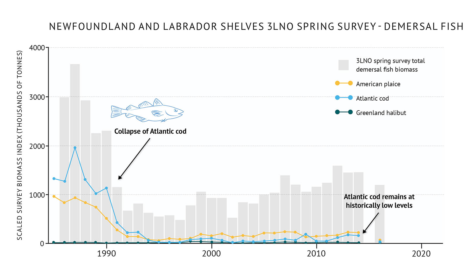 "Figure 34: Spring survey biomass of demersal fish species in 3LNO on the Newfoundland and Labrador Shelves along with individual demersal species biomass. A bar and line graph illustrates the spring survey biomass for demersal fish as well as individual species for the 3LNO NAFO zone of the Newfoundland and Labrador Shelves. Text above the graph says ""Newfoundland and Labrador Shelves 3LNO Spring Survey – Demersal Fish"". The vertical axis on the left shows the scaled survey biomass index in units of thousands of tonnes from 0 to 4000 in increments of 1000. The bottom horizontal axis shows the years between 1985 and 2020 in 10 year increments. The biomass for total demersal fish in the spring 3LNO survey is represented by grey vertical bars. The data extends from 1985 to 2016, but there is no data for 2015. The total survey biomass fluctuates between approximately 3000 and 5500 thousand tonnes in the early 1980s and then declines to approximately 250 thousand tonnes by 1992. It remains below approximately 500 thousand tonnes until the mid-2000s when it starts to increase to 2010 and reaches approximately 1000 thousand tonnes. The fall survey biomass for three demersal fish species is represented by different coloured lines on the same graph. A yellow data line illustrates the survey biomass trend for American plaice. A light blue data line illustrates the survey biomass trend for American cod. A dark green data line illustrates the survey biomass trend for Greenland halibut. Atlantic cod biomass is the highest of the species in the 1980s ranging between 1000 and 2000 thousand tonnes, but it decreases rapidly less than 100 thousand tonnes in the early 1990s and remains low. The biomass of American plaice is near 1000 thousand tonnes in the 1980s, but decreases rapidly in the late 1980s and early 1990s. It then remains generally between 100-200 thousand tonnes to 2016. Greenland halibut has the lowest biomass of the three species and is less than 50 thousand tonnes with small fluctuations from the 1980s to 2016. A small, light blue outline-drawing of an Atlantic cod is placed on the graph above the vertical bars to the left-hand side. Below the drawing there is text which states ""Collapse of northern cod stock"" and an arrow points to the vertical bars for the early 1990s time period. Another line of text is placed on the graph to the right-hand side overlapping the vertical bars which states ""Atlantic cod remains at historically low levels""."