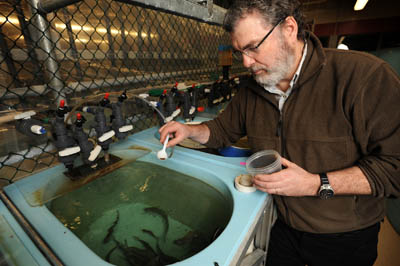 Feeding fish kept in the small (200 litres) tanks during their freshwater growth phase.