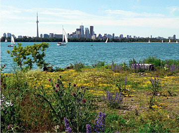 Lake Ontario — with the Toronto Islands and the Toronto city skyline — as seen from the shoreline of the Leslie Street Spit.