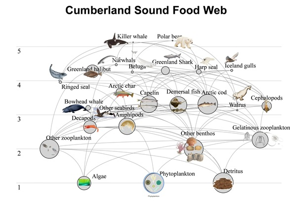This excellent asian carp food web mine very
