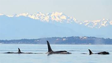 Protecting killer whales