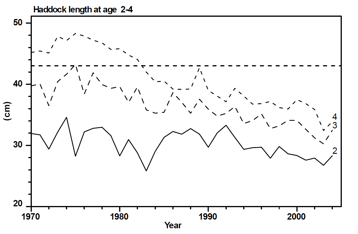 Figure 9 - Haddock length at age for ages 2-4