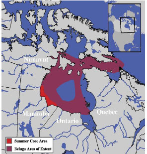 Beluga Whale Distribution: Western Hudson Bay Population as described in the following paragraph