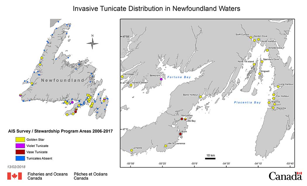 Invasive tunicates in Newfoundland and Labrador Waters