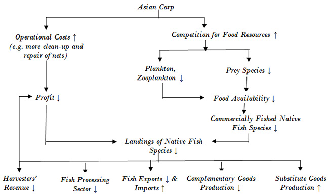 Not clear asian carp food web apologise, there