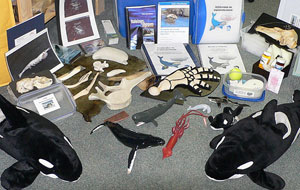 This kit consists of a case containing various educational items, including an interpretation binder and information sheets. Figurines of whales, seals and sharks are accompanied by whale baleen specimens and krill samples.