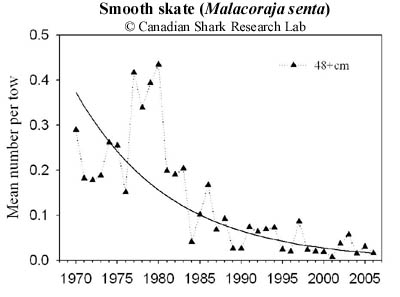 Stratified mean number per tow of adult smooth skate (Malacoraja senta) from July research vessel (RV) survey data collected on the eastern Scotian Shelf (NAFO Divisions 4VsW). The solid black line indicates the exponential decline rate.