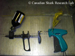 An oxytetracycline (OTC) injection gun and a conventional T-bar tagging gun used for the mark-recapture of Northwest Atlantic skates