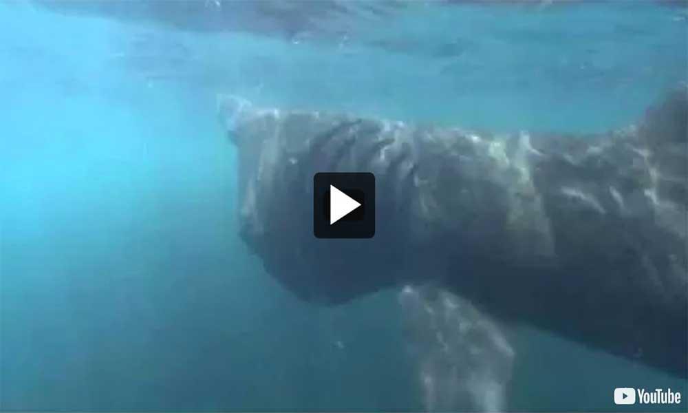 Sharks sex video